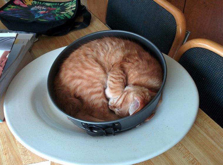 γάτες φωτογραφίες γάτες