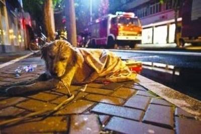 Αληθινή ιστορία: Kουτάβι golden retriever περίμενε το αφεντικό του μέχρι θανάτου