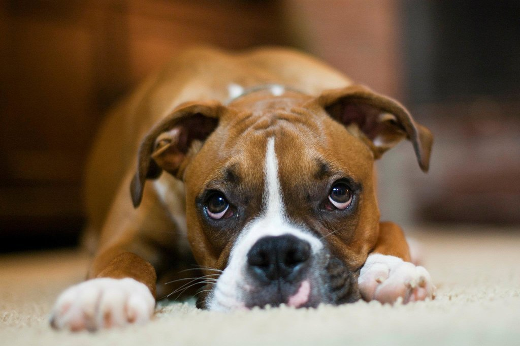 σκύλοι για παιδιά σκύλοι για οικογένεια ράτσες σκύλων