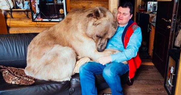 Ορφανό αρκουδάκι διασώθηκε από ζευγάρι Ρώσων αλλά ποτέ δεν περίμεναν πως μια αρκούδα 140 κιλών θα γίνονταν μέλος της οικογένειας τους