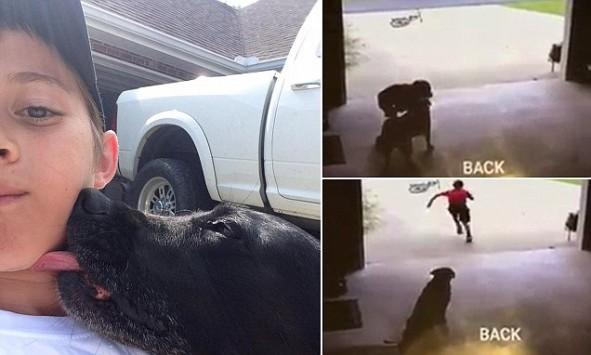 Σκύλος γκαράζ