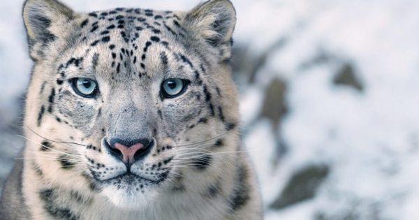 Φημισμένος φωτογράφος πέρασε χρόνια απαθανατίζοντας είδη ζώων που είναι προς εξαφάνιση και το αποτέλεσμα είναι υπέροχο
