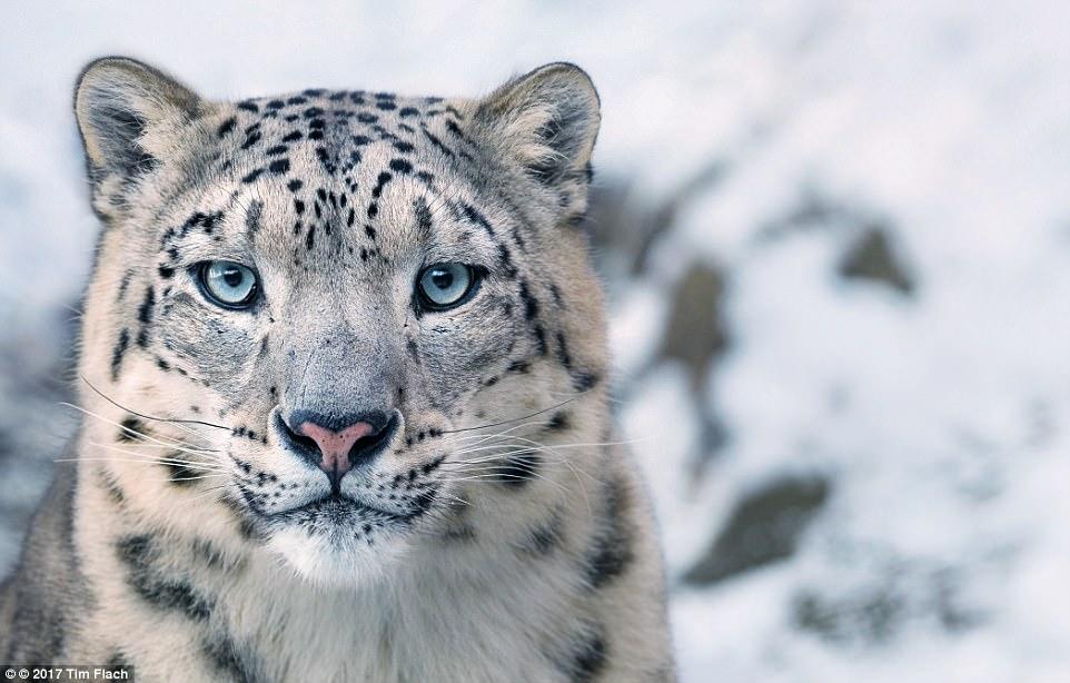 ζώα προς εξαφάνιση