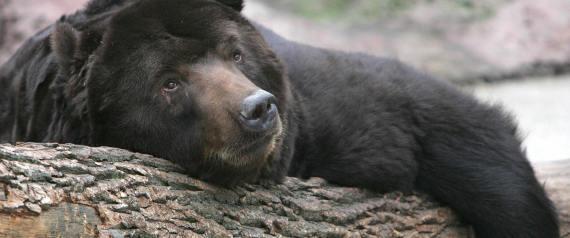 Το Κογκρέσο δίνει το «πράσινο» φως στους κυνηγούς να στοχεύουν αρκούδες σε χειμερία νάρκη