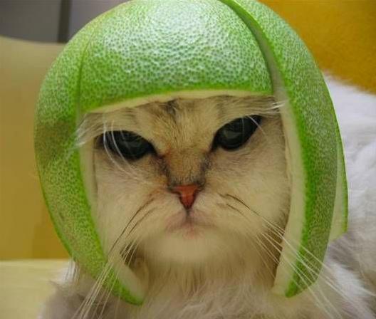 σκυλάκια λαγουδάκι ζωάκια γατάκια αστεία ζωάκια