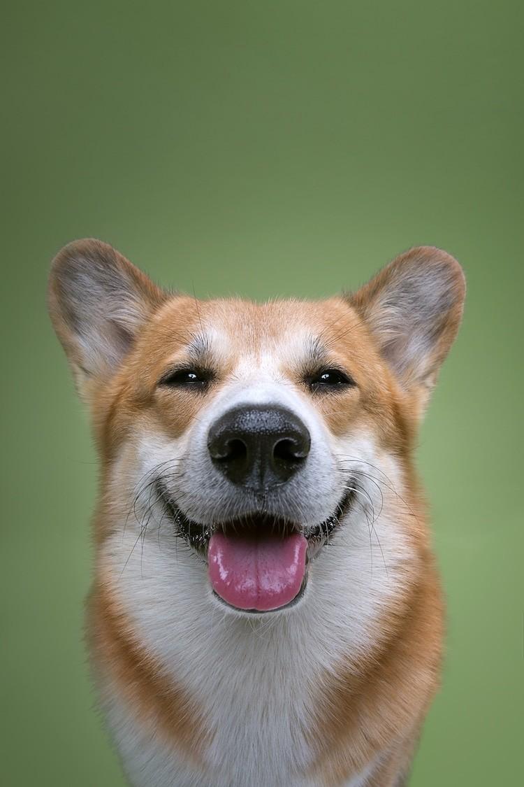 εκφράσεις σκύλων