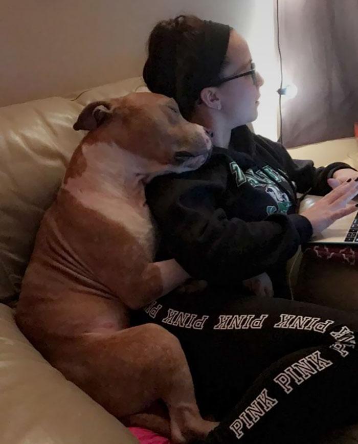 υιοθεσία σκύλων