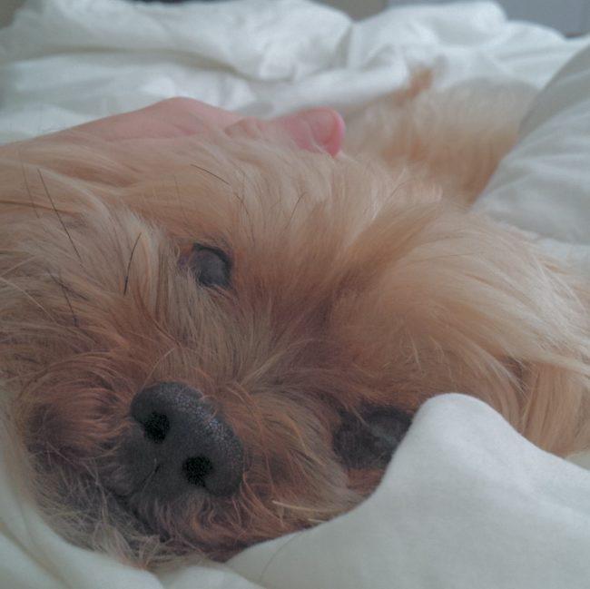 ύπνος σκυλιά