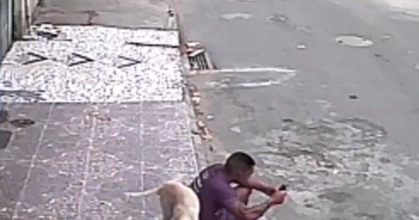 Γελάστε υπεύθυνα: Σκύλος «ανακουφίζεται» στην πλάτη ανυποψίαστου περαστικού (βίντεο)!