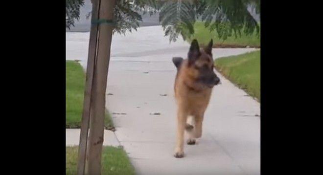 σκύλος έχασε το αφεντικό του Σκύλος