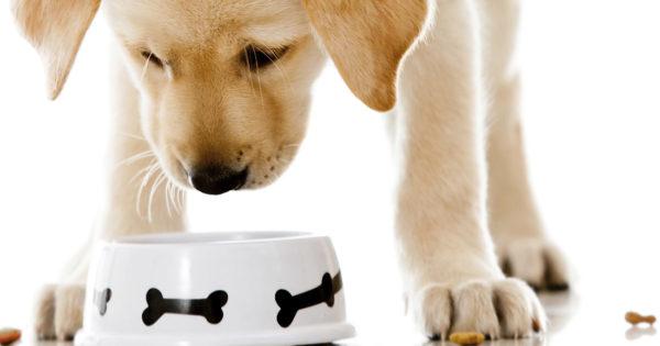 Αυτό το μπαχαρικό έχει πολλά οφέλη για το σκύλο σου