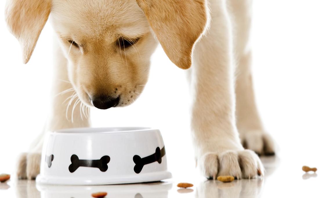 φαγητό Σκύλος μπαχαρικό