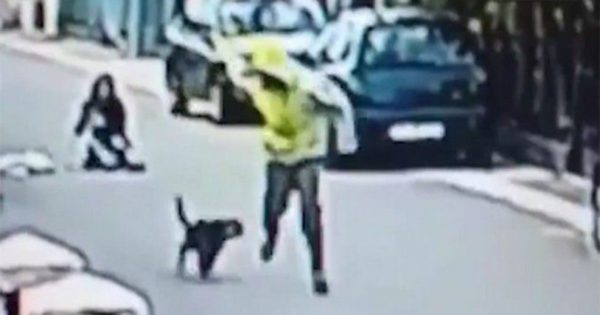 Αδέσποτος σκύλος σώζει γυναίκα από θρασύτατο ληστή