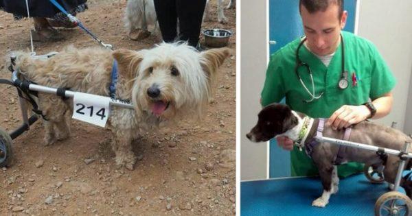 Ο Έλληνας κτηνίατρος που κατασκευάζει αναπηρικά αμαξίδια για κατοικίδια ζωάκια