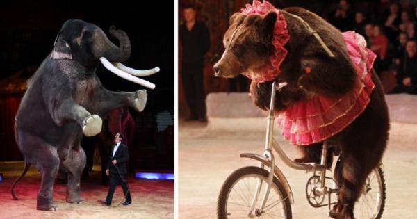 Η Ιταλία απαγόρευσε την χρήση ζώων στο τσίρκο