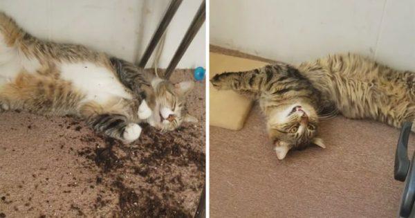 Βρήκε τις γάτες της «κόκαλο» επειδή είχαν φάει την ινδική κάνναβη που καλλιεργούσε
