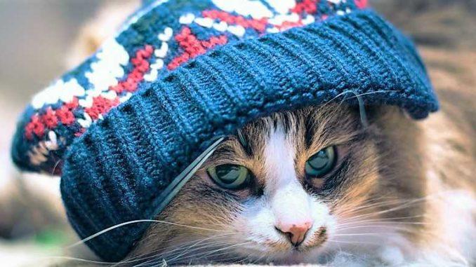 γάτες γάτα προστασία από το κρύο γάτα κρύο Γάτα