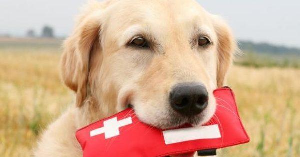 Θεσσαλονίκη: Κουτιά πρώτων βοηθειών για τους σκύλους που έφαγαν φόλες, μοίρασε περιβαλλοντική οργάνωση