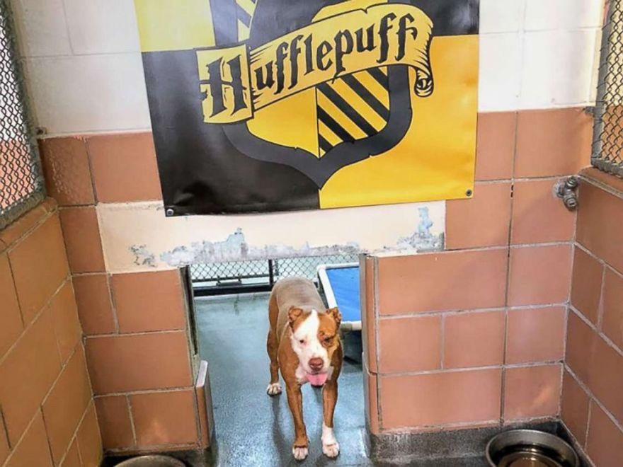 σκύλοι harry potter σκύλοι καταφύγιο σκύλων