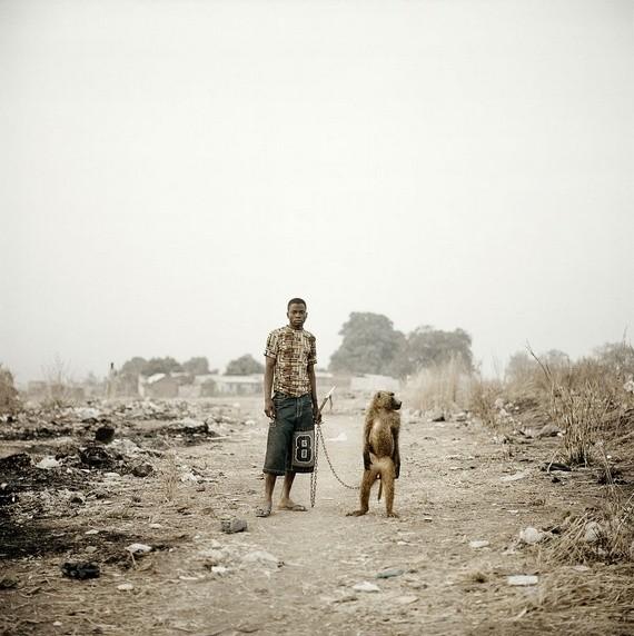 κατοικίδια στην αφρική αφρική κατοικίδια Αφρική