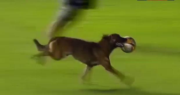 σκύλος ποδοσφαιρο Σκύλος μέσι