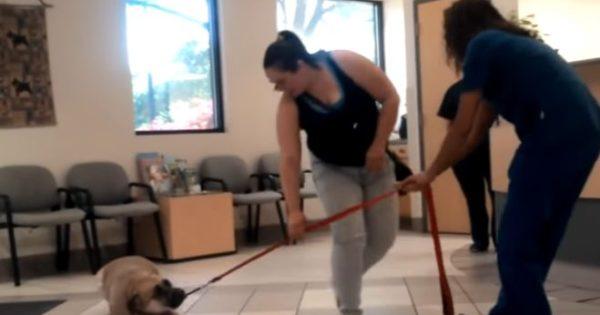 Βίντεο: Τρομαγμένα σκυλιά προσπαθούν μάταια να αποφύγουν τον κτηνίατρο…