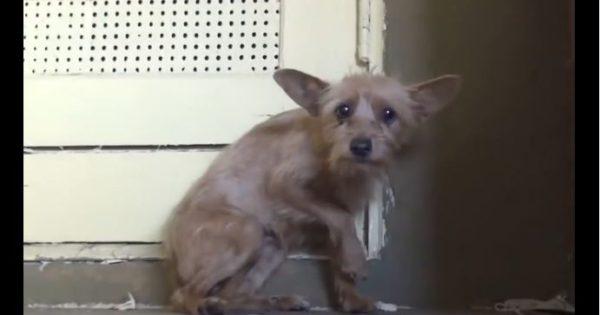Απίστευτη μεταμόρφωση σκύλου που συγκινεί