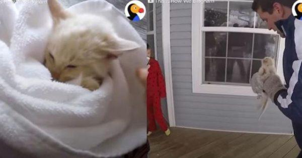 Επανέφεραν στη ζωή γατάκι που είχε κυριολεκτικά παγώσει από το κρύο