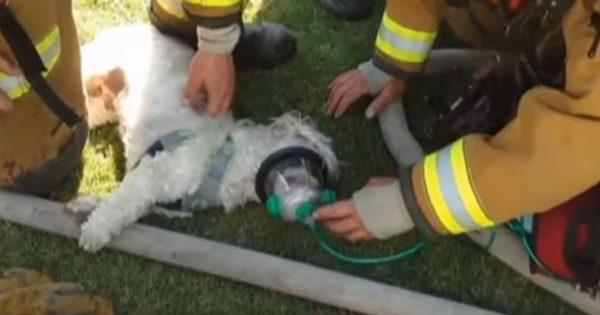 Η απίστευτη προσπάθεια πυροσβεστών να σώσουν έναν σκύλο μέσα από τις φλόγες