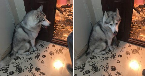 Άφησαν τον σκύλο του μόνο του για 3 ώρες και το μετάνιωσαν (φώτο)