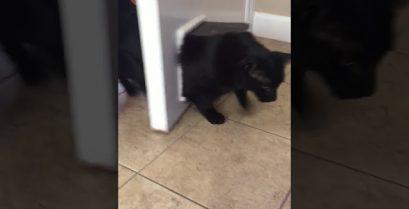 Πολύ γέλιο: Η χοντρή γάτα σφήνωσε στην πόρτα