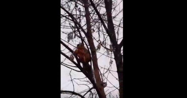 """Λιχούδης σκίουρος """"πιάστηκε στα πράσα"""" με ένα κομμάτι πίτσα"""