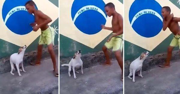 Ιδού πως ξεχωρίζει ένας σκύλος από τη Βραζιλία (βίντεο)