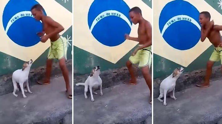 Σκύλος Βραζιλία