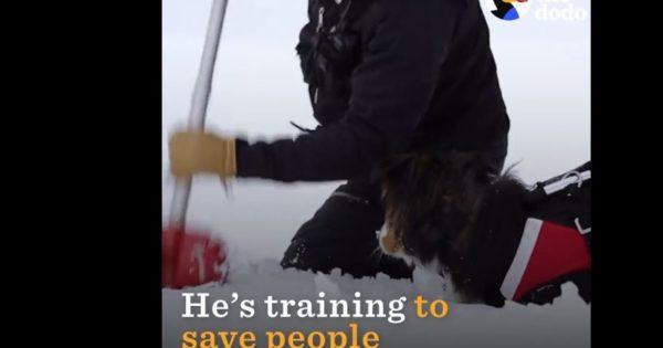 O απίστευτος σκύλος-διασώστης που σώζει ζωές