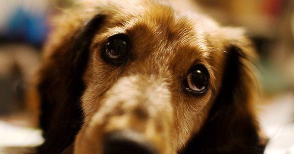 Είναι ο σκύλος σας … ζηλιάρης; – Το απόλυτο τεστ! (βίντεο)