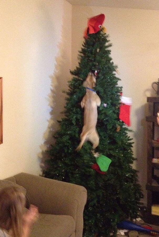 Χριστούγεννα Σκύλος σκύλοι