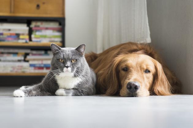 σκύλοι έρευνα γάτες