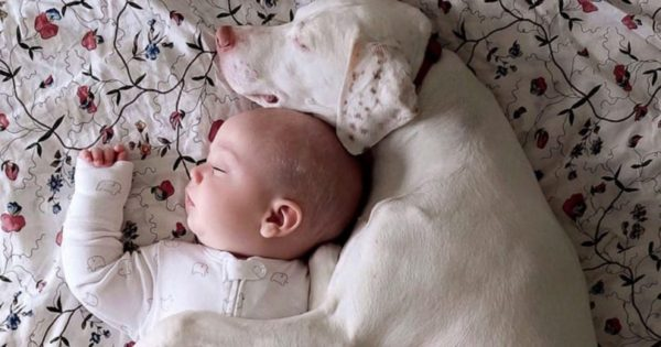 Κακοποιημένο κουτάβι φοβάται τα πάντα, μέχρι που η μαμά το γνωρίζει στο μωρό της οικογένειας