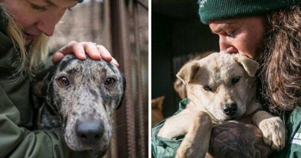 170 σκύλων απελευθερώθηκαν από διασώστες λίγο πριν σφαγιαστούν για να γίνουν σούπα στη Ν. Κορέα