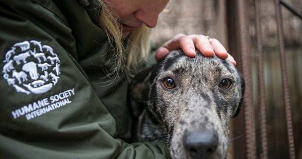 Συγκλονιστικές εικόνες από την απελευθέρωση 170 σκύλων λίγο πριν σφαγιαστούν για να γίνουν σούπα στη Ν. Κορέα