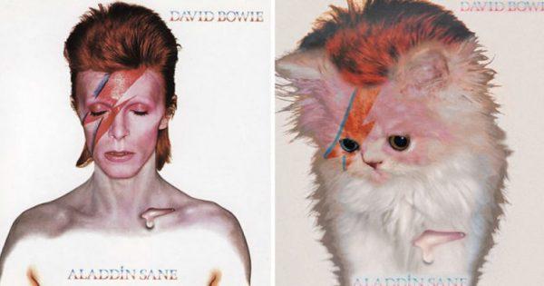 Πανέμορφα γατάκια καταλαμβάνουν θρυλικά εξώφυλλα μουσικών άλμπουμ