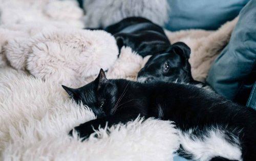 Κατοικίδια και πυροτεχνήματα: Πώς να προστατεύσετε σκύλους και γάτες το βράδυ της Πρωτοχρονιάς