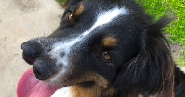 Σκύλος με δυο μύτες ήταν καταδικασμένος να πεθάνει, αλλά αυτός ο άνθρωπος τον έσωσε