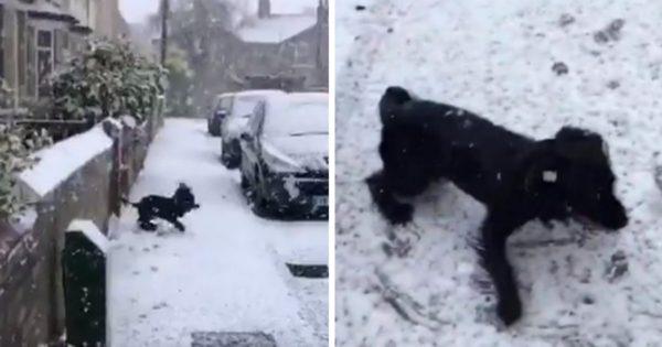 Κουτάβι βλέπει για πρώτη φορά χιόνι και παθαίνει παράκρουση