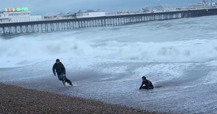 σκύλος θάλασσα Σκύλος