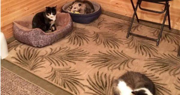 Γιαγιά νόμιζε ότι φροντίζει 3 γάτες μέχρι που ο εγγονός είδε ότι η τρίτη δεν έχει σχέση με γάτα