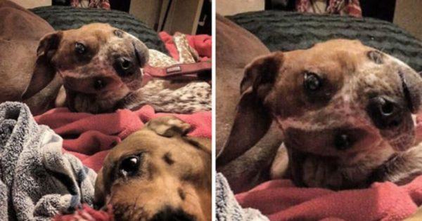 Πολλοί δεν μπορούν να καταλάβουν τι συμβαίνει με αυτόν τον σκύλο