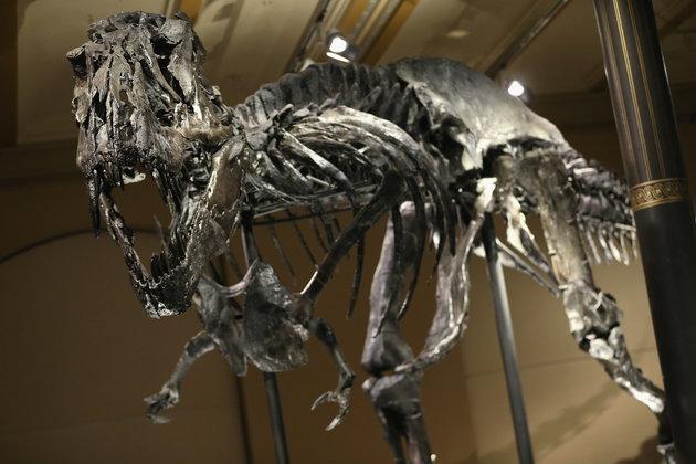 τυραννόσαυρος δεινόσαυροι
