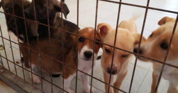 Τα ζώα αποκτούν φωνή στις δικαστικές αίθουσες